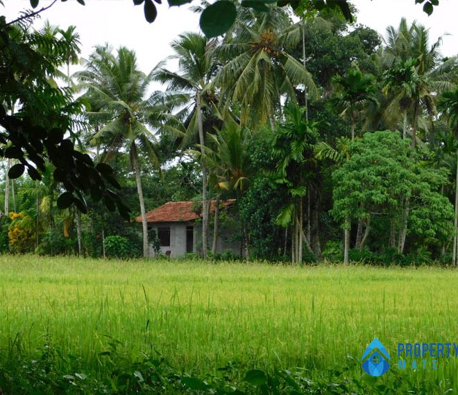 Land for sale in Athurugiriya Galwarusawa road facing paddy field 4