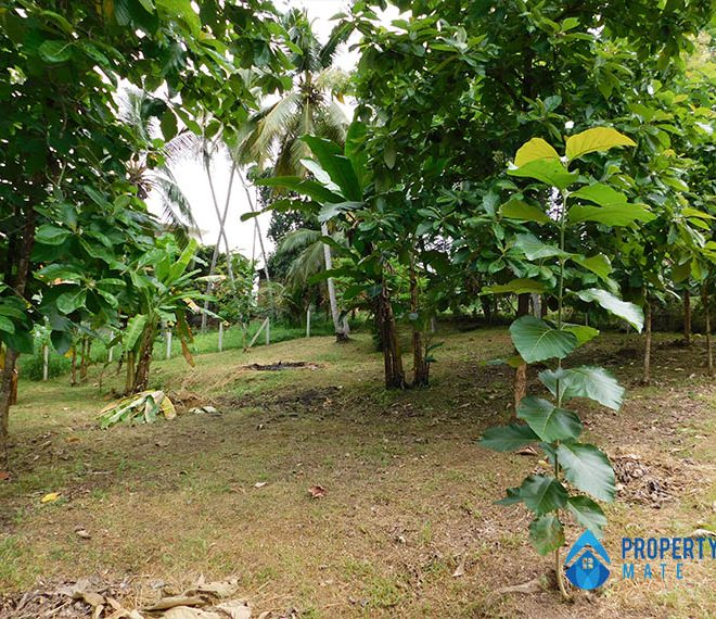 Land for sale in Ragama Peralanda 1